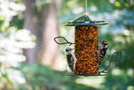 Wild Birds Unlimited Hot Pepper Seed Cylinder